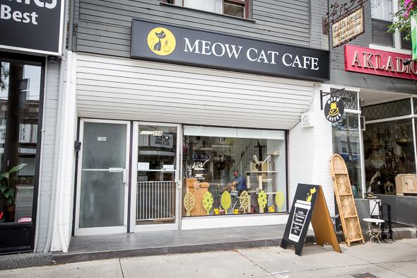 Meow Cat Cafe Toronto