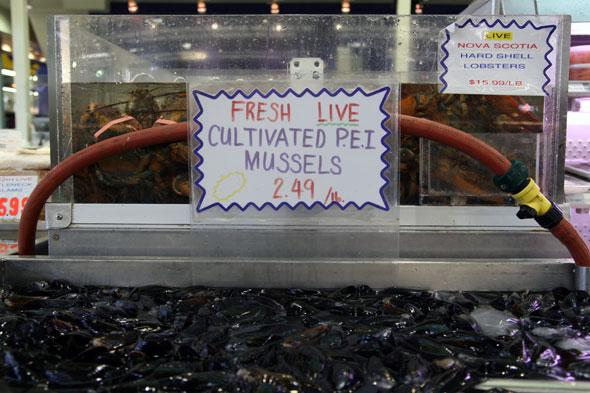 20070718_mussels.jpg