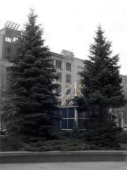 20070411_treesandshed.jpg