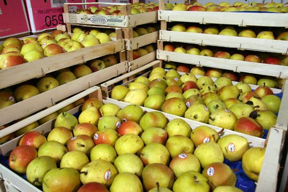 20071006_pears.jpg