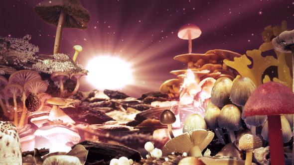 Mushroom movie toronto