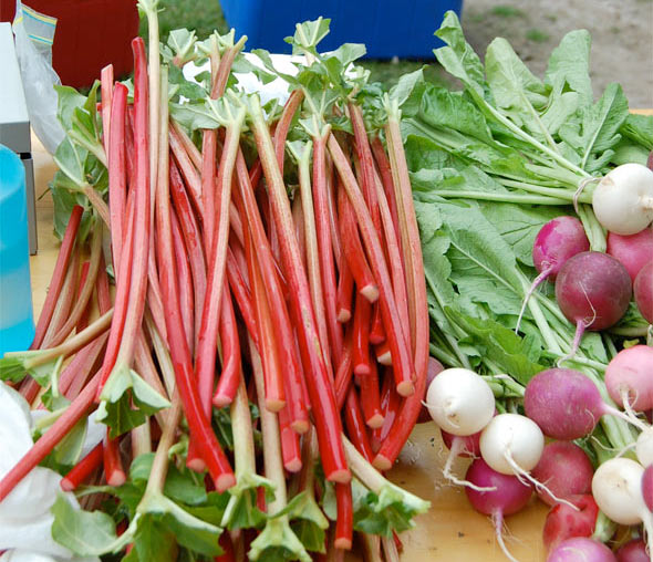 ontario rhubarb