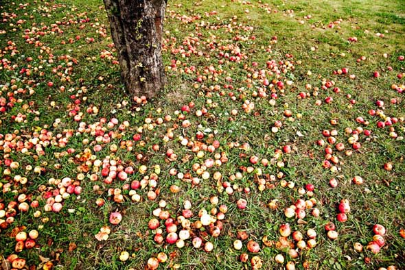 20091003-gtatripping-caves-apples.jpg