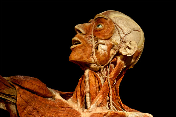Wide Load Sign >> Body Worlds Returns to Toronto, This Time with More Heart