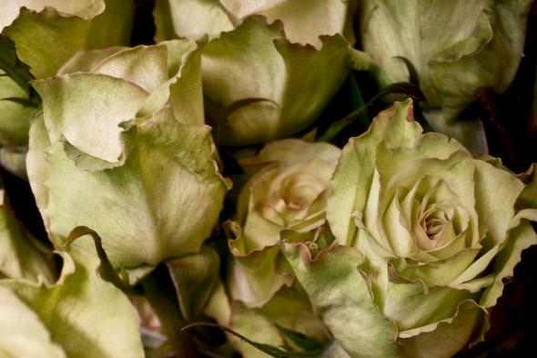 Martins Flowers