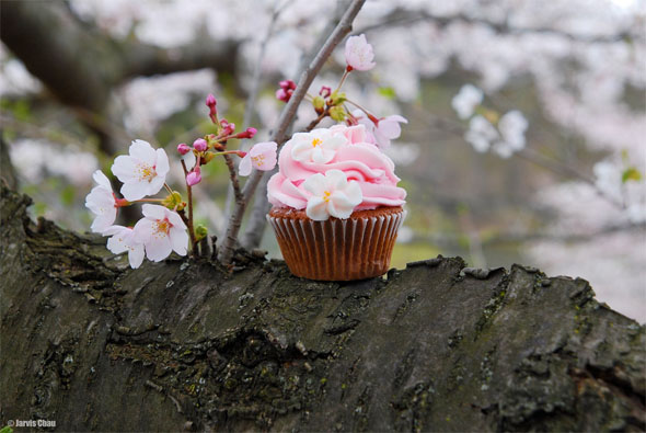 cupcake cherry blossom