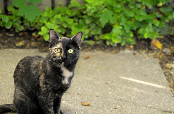 Toronto Adopt A Feral Cat
