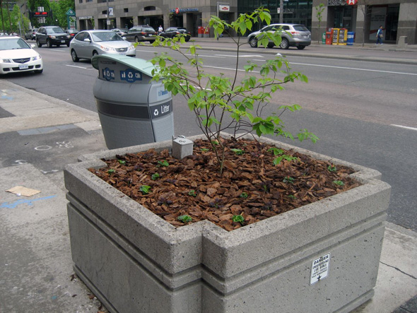 2011523-planter-natura;.jpg