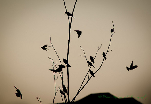 birds, photo, nature