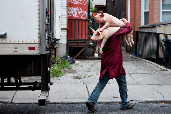 pork, chinatown, pigs