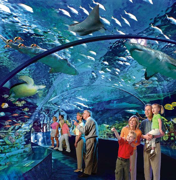Ripley 39 S Releases More Details About Toronto Aquarium