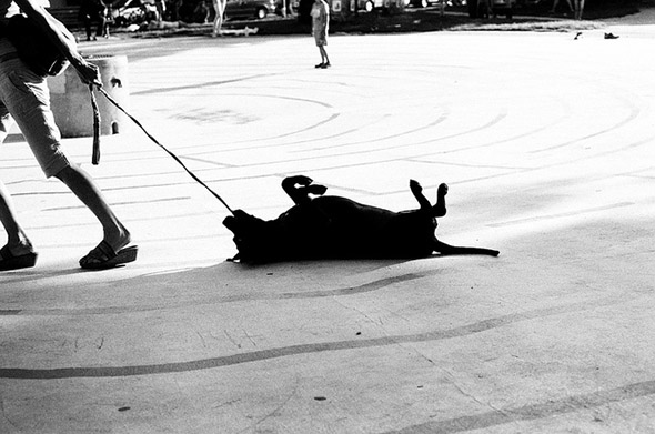 dog, drag, street
