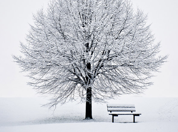 tree, bench, snow