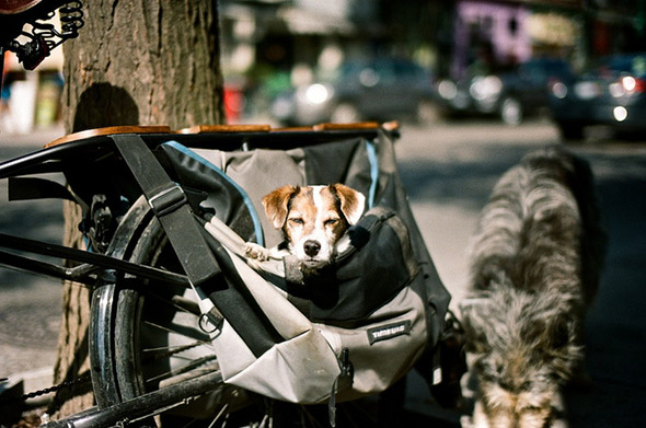 dog, bag, bike