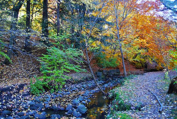 2012119-fall14.jpg