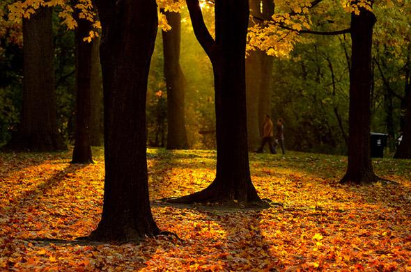 2012119-fall15.jpg