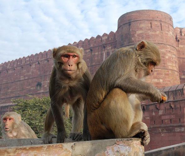 toronto ikea monkey