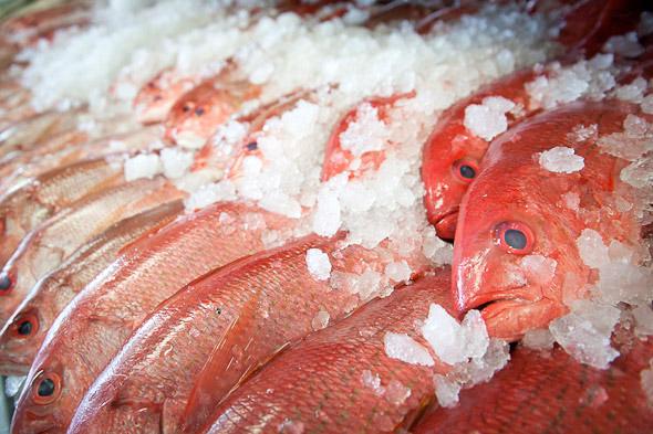 Fish Stores Toronto