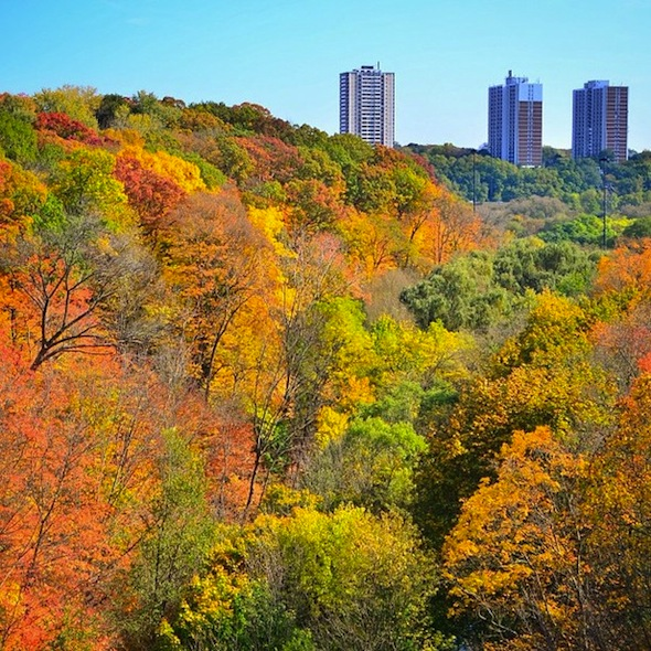 fall colours in toronto