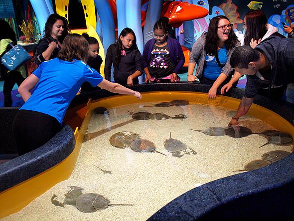 Touch tank at Ripley's Aquarium
