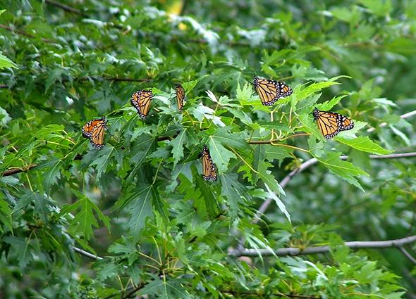butterfly park toronto