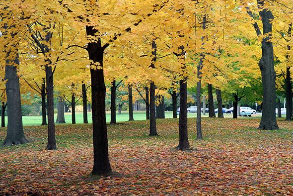 fall high park