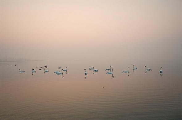 swan sunrise toronto