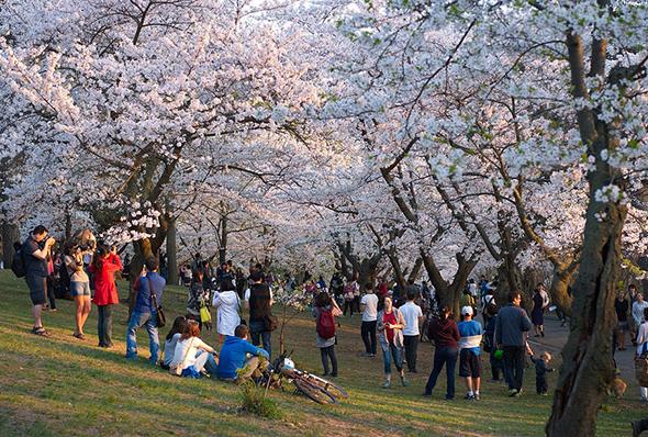 spring events Toronto