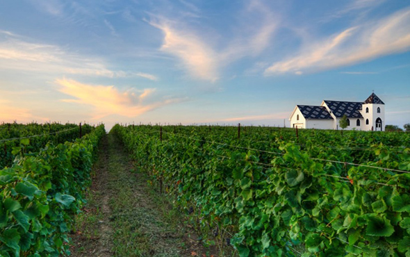ontario wineries