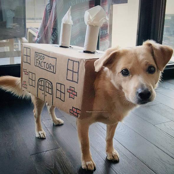 Toronto Dog