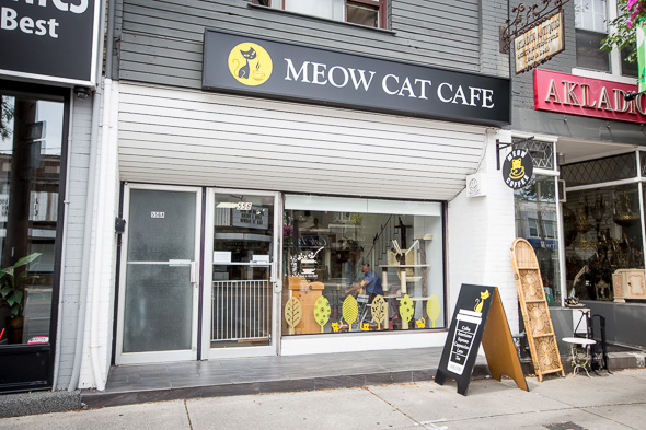 meow cat cafe - blogto