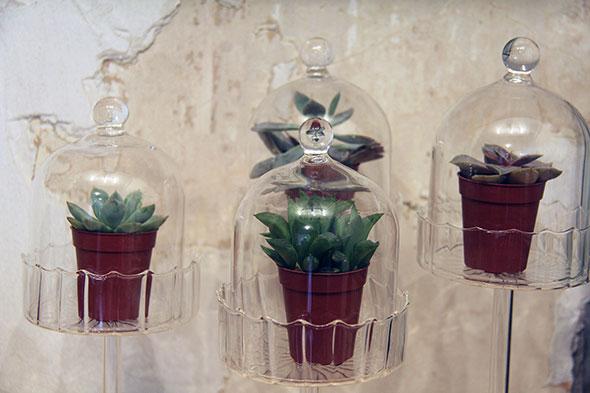 crown flora terrarium toronto