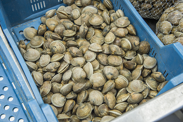 Osler Fish Warehouse Toronto
