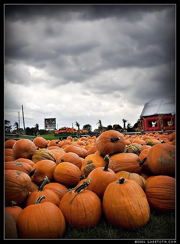 20061107_autumn04.jpg