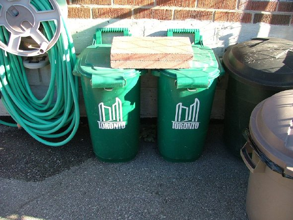 Raccoon Proof Green Bins Fact Or Fiction Part 2