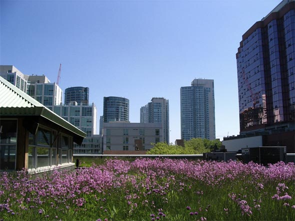 SustainableCity02_pic2.jpg