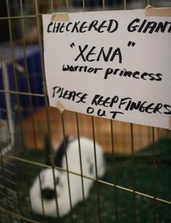 Xena the Warrior Rabbit