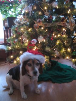 Bennie by the Christmas tree