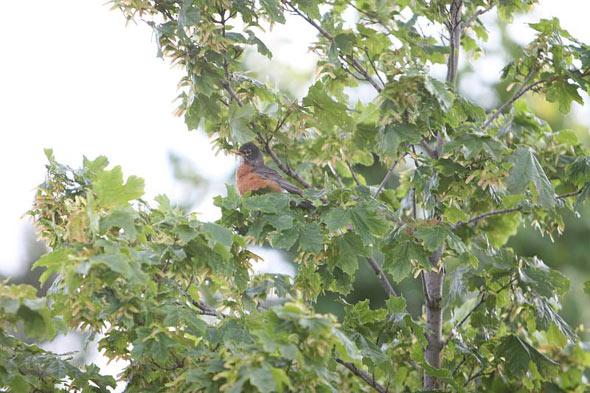 20080526_birdattack01.jpg