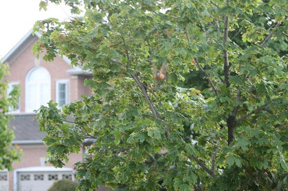 20080526_birdattack02.jpg
