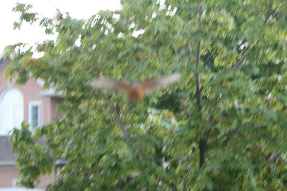 20080526_birdattack04.jpg