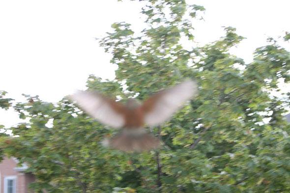 20080526_birdattack05.jpg