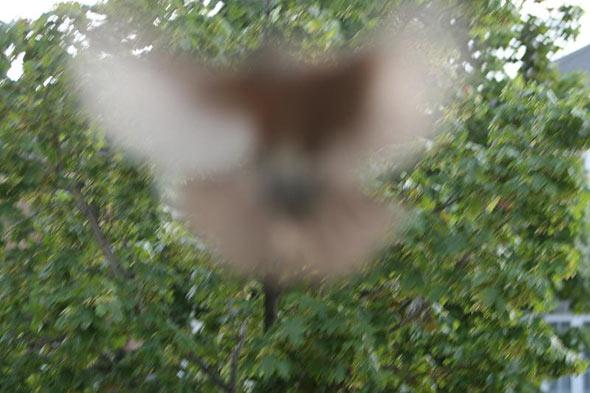 20080526_birdattack06.jpg