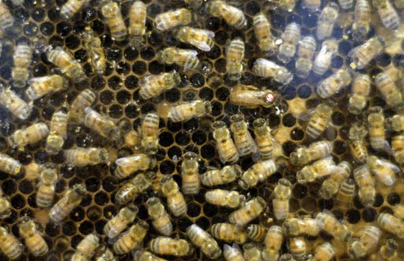 Swarm of bees at The Farm at The CNE