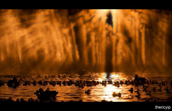20081006_ducks13.jpg