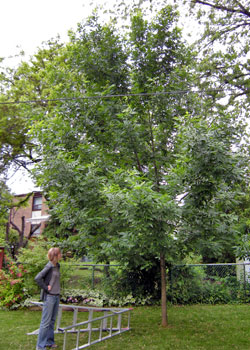 LEAF Arborist Sarah Lamon