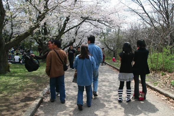 High Park Hanami