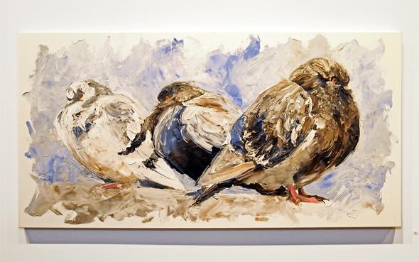 Ryan Dineen Pigeons