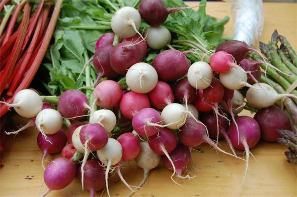 toronto radishes