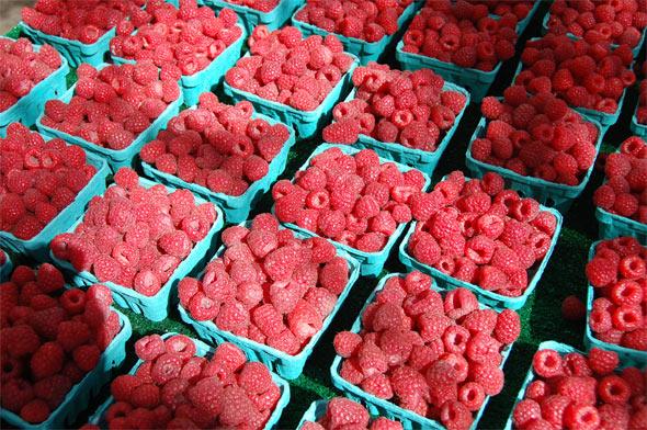 raspberry toronto